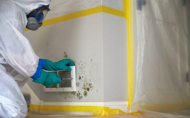 mold removal service near me